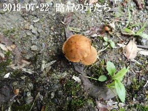 2019-07・22 今日の出遭い・・・ (1).JPG