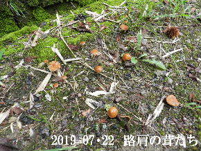 2019-07・22 今日の出遭い・・・ (3).JPG