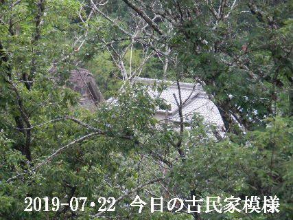 2019-07・22 今日の古民家模様.JPG