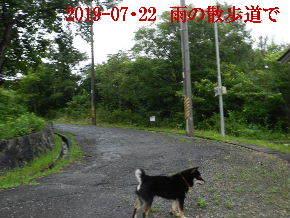 2019-07・22 今日の散歩道・・・ (1).JPG