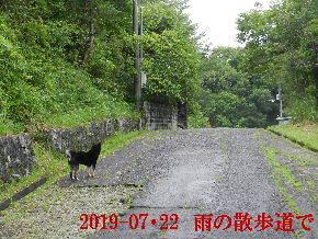 2019-07・22 今日の散歩道・・・ (2).JPG