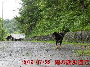 2019-07・22 今日の散歩道・・・ (3).JPG