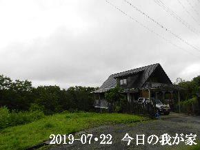 2019-07・22 今日の里山模様・・・ (1).JPG