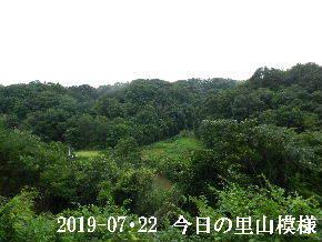2019-07・22 今日の里山模様・・・ (3).JPG
