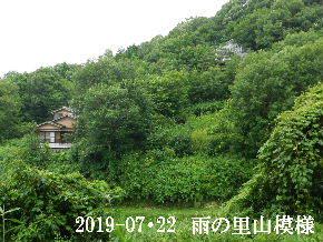 2019-07・22 今日の里山模様・・・ (5).JPG