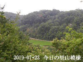 2019-07・23 今日の里山模様・・・ (4).JPG