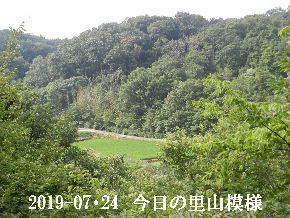 2019-07・24 今日の里山模様・・・ (4).JPG