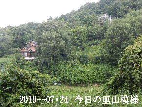 2019-07・24 今日の里山模様・・・ (5).JPG