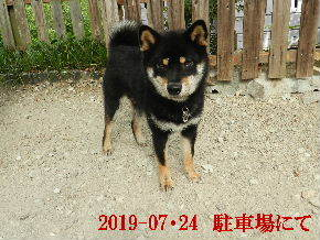 2019-07・24 今日の麻呂 (4).JPG