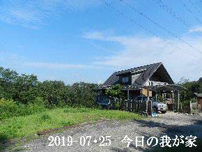 2019-07・25 今日の里山模様・・・ (1).JPG