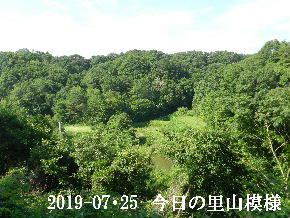 2019-07・25 今日の里山模様・・・ (3).JPG