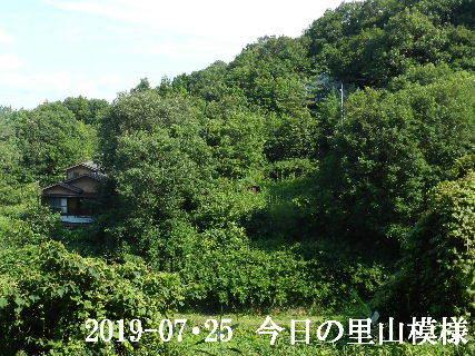 2019-07・25 今日の里山模様・・・ (5).JPG