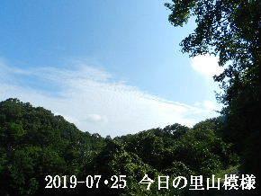 2019-07・25 今日の里山模様・・・ (6).JPG