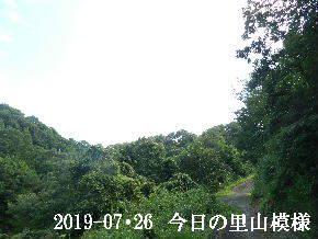 2019-07・26 今日の里山模様・・・ (6).JPG