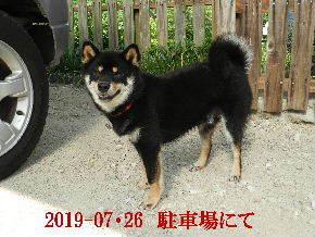 2019-07・26 今日の麻呂 (4).JPG