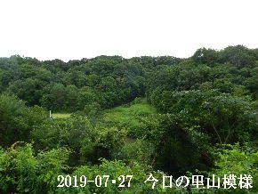 2019-07・27 今日の里山模様・・・ (3).JPG