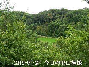 2019-07・27 今日の里山模様・・・ (4).JPG