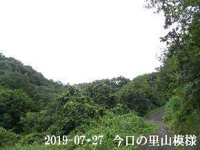 2019-07・27 今日の里山模様・・・ (6).JPG