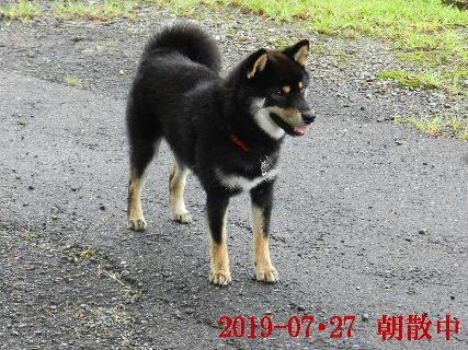 2019-07・27 今日の麻呂 (5).JPG