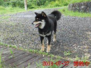 2019-07・27 今日の麻呂 (7).JPG