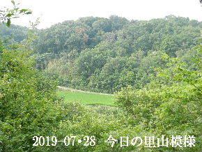 2019-07・28 今日の里山模様・・・ (4).JPG