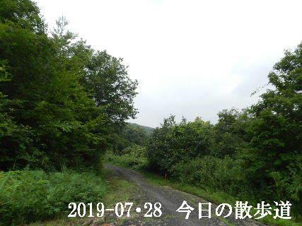 2019-07・28 今日の里山模様・・・ (5).JPG