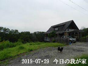 2019-07・29 今日の里山模様・・・ (1).JPG