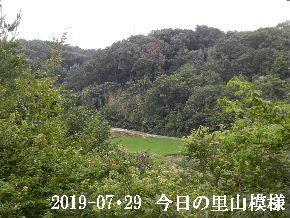 2019-07・29 今日の里山模様・・・ (4).JPG
