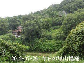 2019-07・29 今日の里山模様・・・ (5).JPG