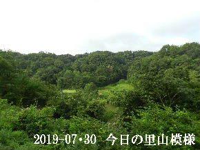 2019-07・30 今日の里山模様・・・ (3).JPG