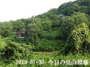 2019-07・30 今日の里山模様・・・ (5).JPG