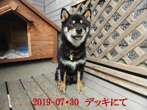 2019-07・30 今日の麻呂 (2).JPG