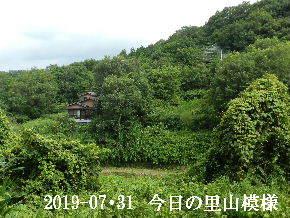 2019-07・31 今日の里山模様・・・ (5).JPG