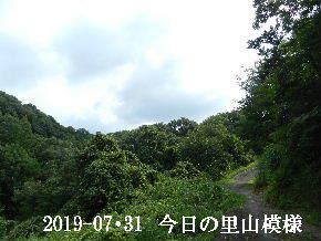 2019-07・31 今日の里山模様・・・ (6).JPG