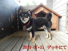 2019-07・31 今日の麻呂 (1).JPG