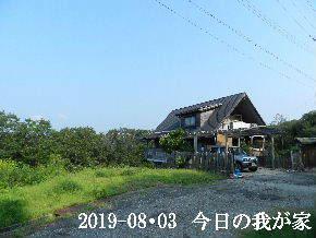 2019-08・03 今日の里山模様・・・ (1).JPG