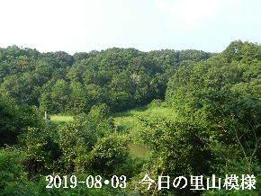 2019-08・03 今日の里山模様・・・ (4).JPG