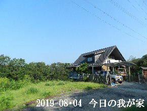 2019-08・04 今日の里山模様・・・ (1).JPG
