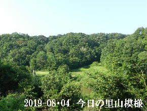 2019-08・04 今日の里山模様・・・ (3).JPG