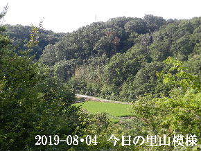2019-08・04 今日の里山模様・・・ (4).JPG