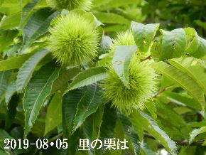 2019-08・05 今日の出遭い・・・ (2).JPG