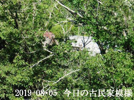 2019-08・05 今日の古民家模様.JPG