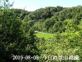 2019-08・05 今日の里山模様・・・ (4).JPG