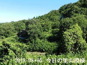 2019-08・05 今日の里山模様・・・ (5).JPG