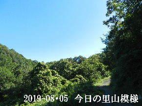 2019-08・05 今日の里山模様・・・ (6).JPG