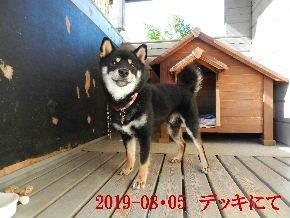2019-08・05 今日の麻呂 (2).JPG