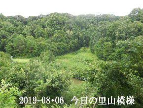 2019-08・06 今日の里山模様・・・ (3).JPG