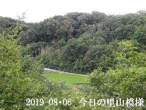 2019-08・06 今日の里山模様・・・ (4).JPG