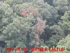 2019-08・06 今日の里山模様・・・ (5).JPG