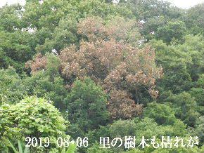 2019-08・06 今日の里山模様・・・ (6).JPG
